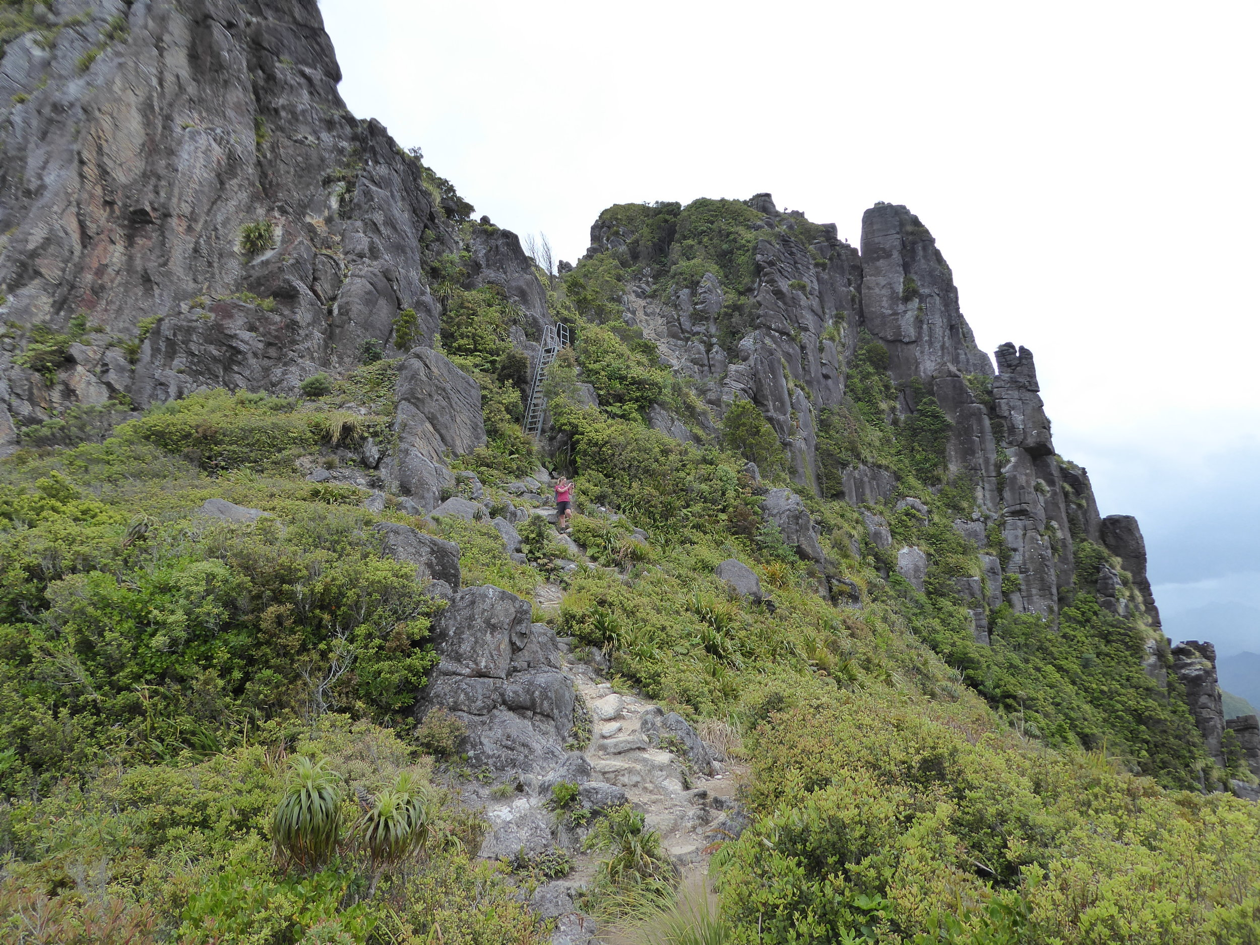 It's a steep way to the top (of the pinnacles, new Zealand)