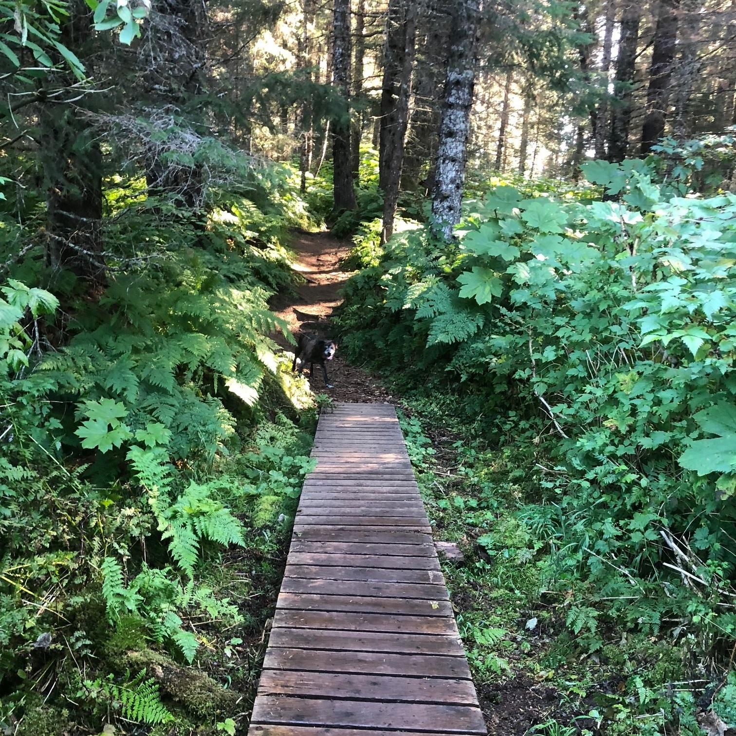 Wooden walkway on Otterbahn trail
