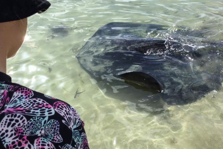 Redhead at Bendalong – Feeding the stingrays