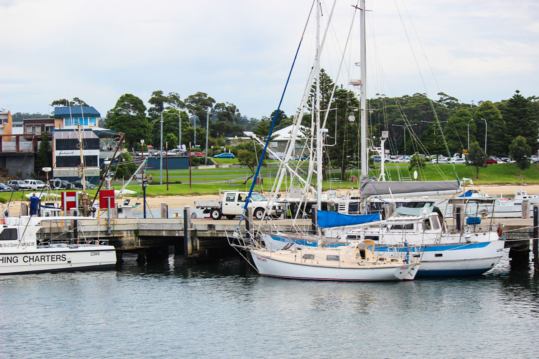 Redhead-at-Bendalong-Ulladulla-harbour-fishing-charters.jpg