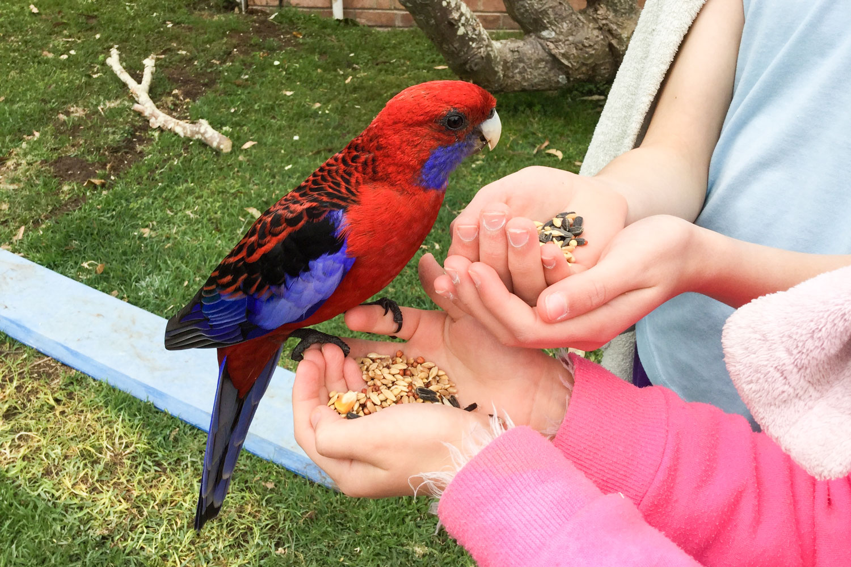 Claudia-and-Marisa-feeding-bird-2.jpg
