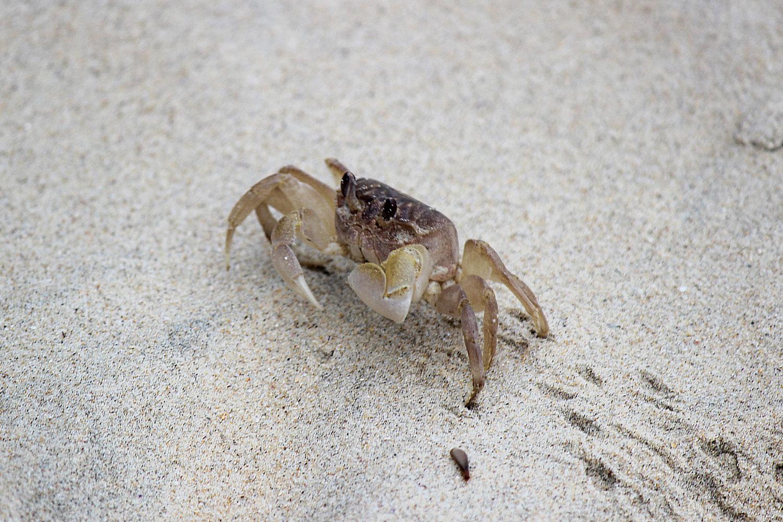 Crab-on-sand.jpg