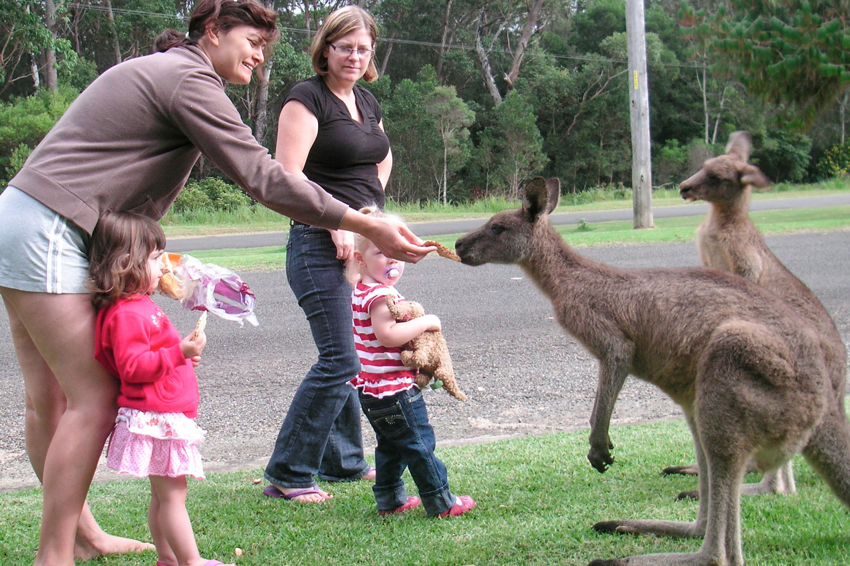 Feeding-Kangaroos.jpg