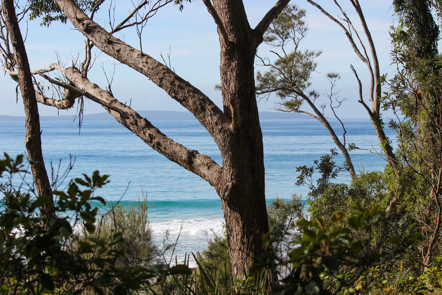 Bush-view-of-beach.jpg