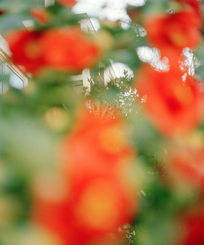 blurryflowers-copia.jpg