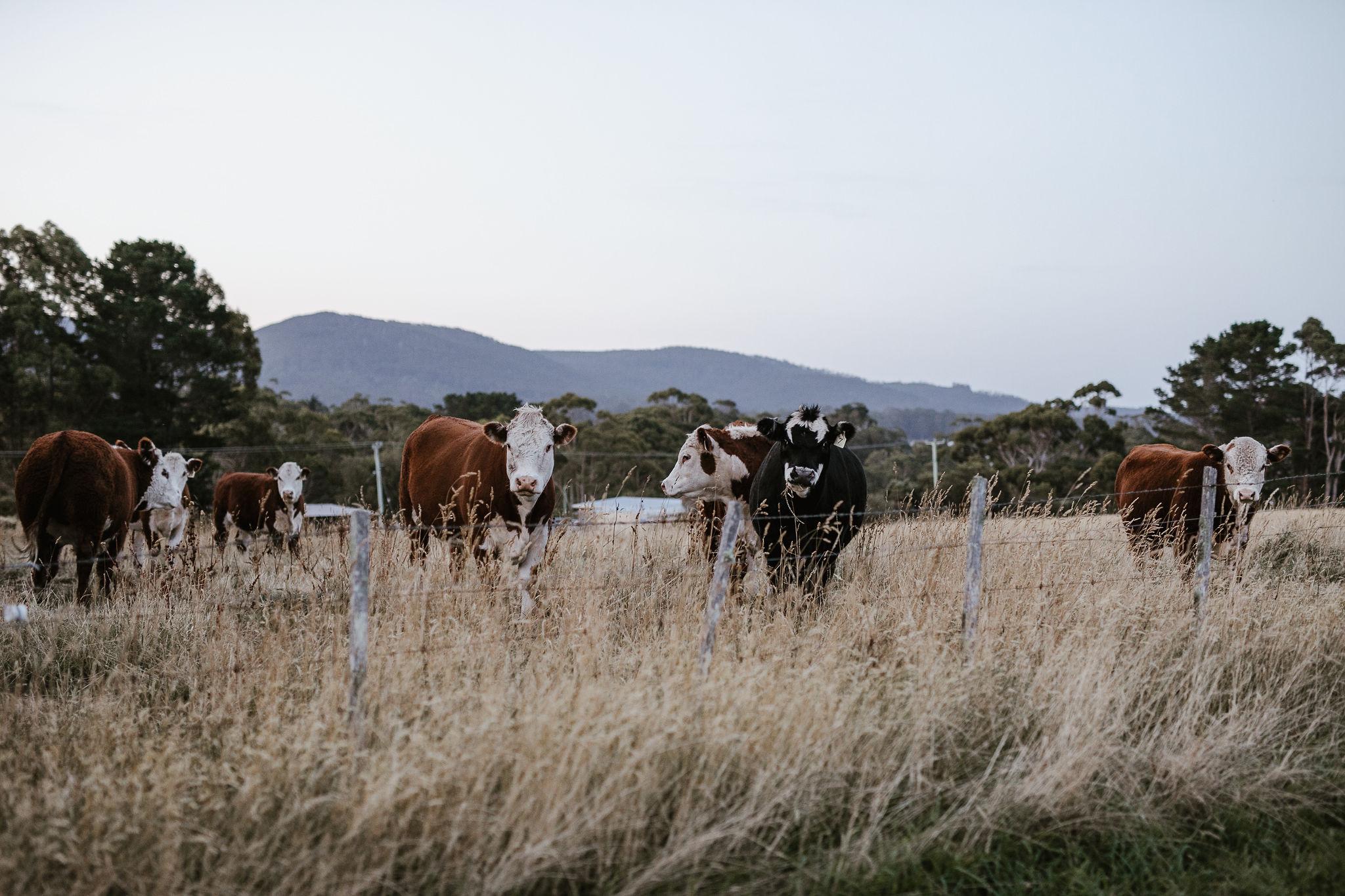 NinaHamilton-TasmanianWeddingPhotographer-Chloe+Nick-OldFarmPortArthur-ShareMe-703 (1).jpg