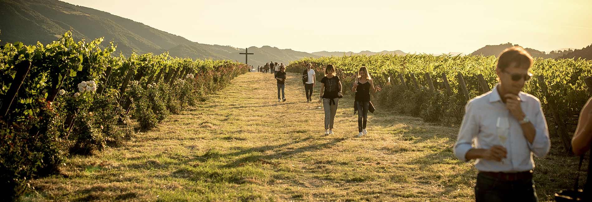 Alla scoperta del panorama vitivinicolo
