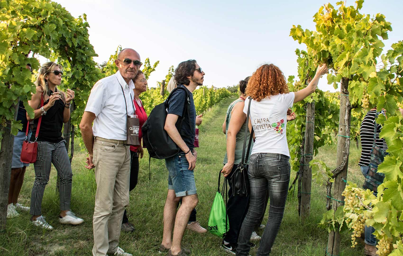Alla scoperta delle vigne dell' Altra Staffetta