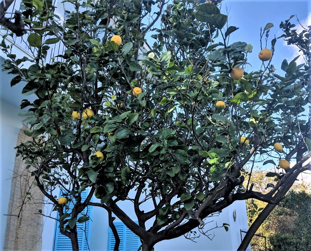 30 winter lemon tree villa ama sicily.jpg