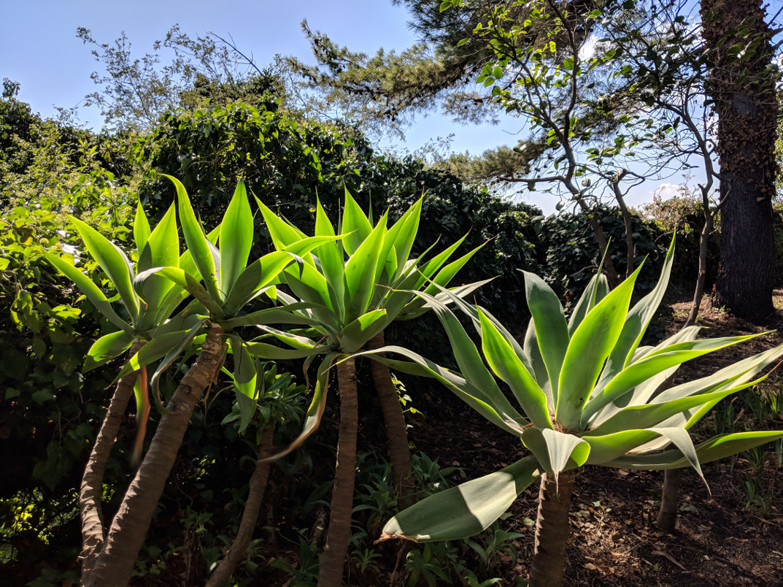 39 agave villa ama sicily.jpg