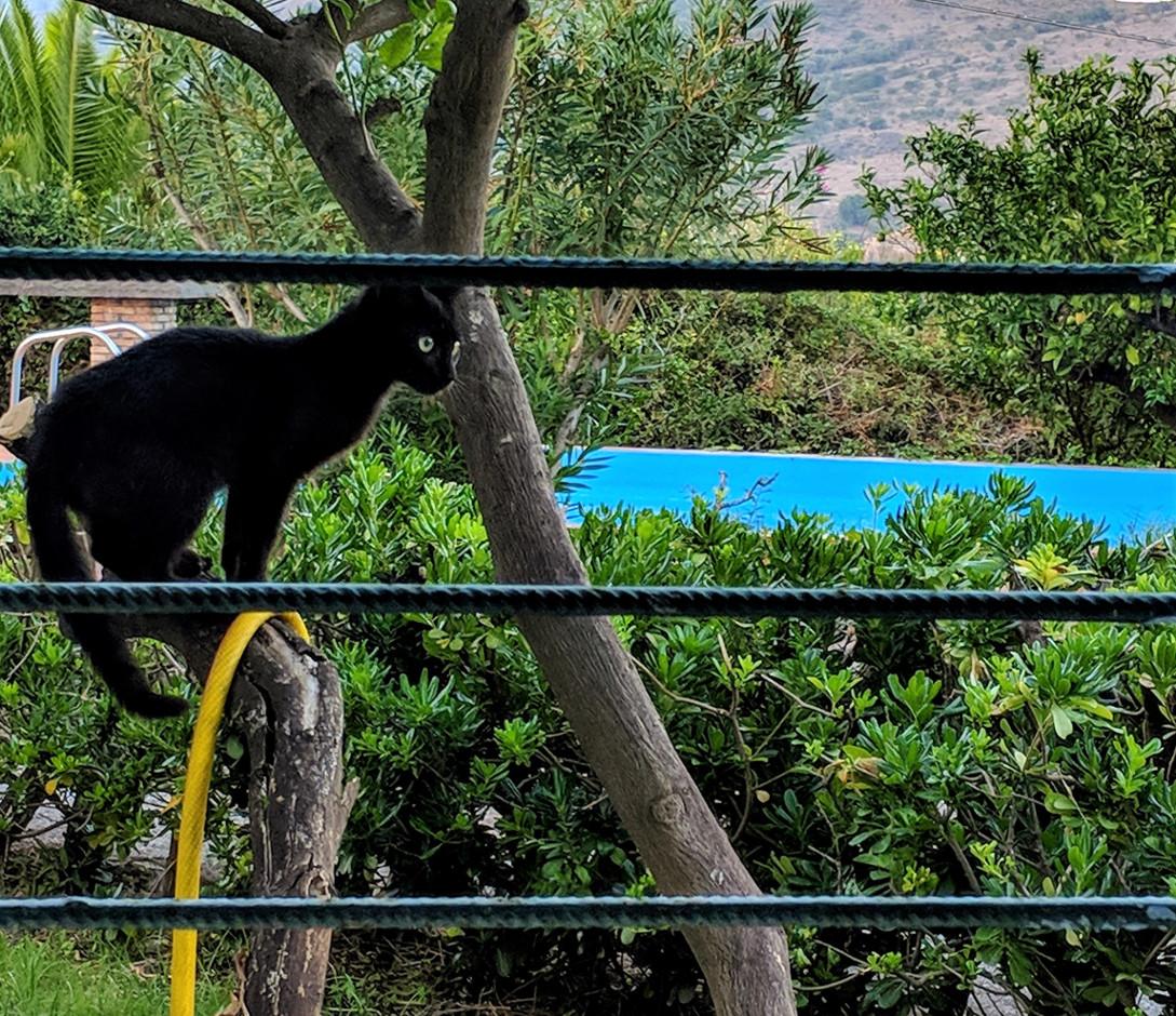 42 poolside garden villa ama sicily.jpg