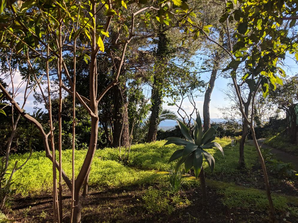 71 front garden2 villa ama sicily.jpg