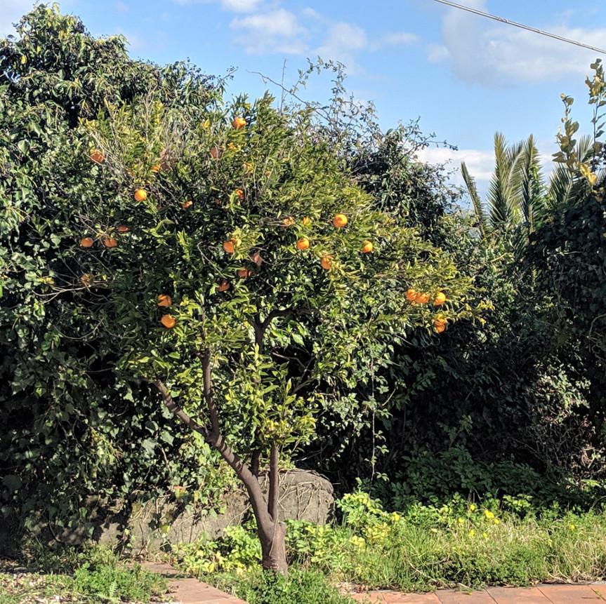 115 orange tree villa ama sicily.jpg