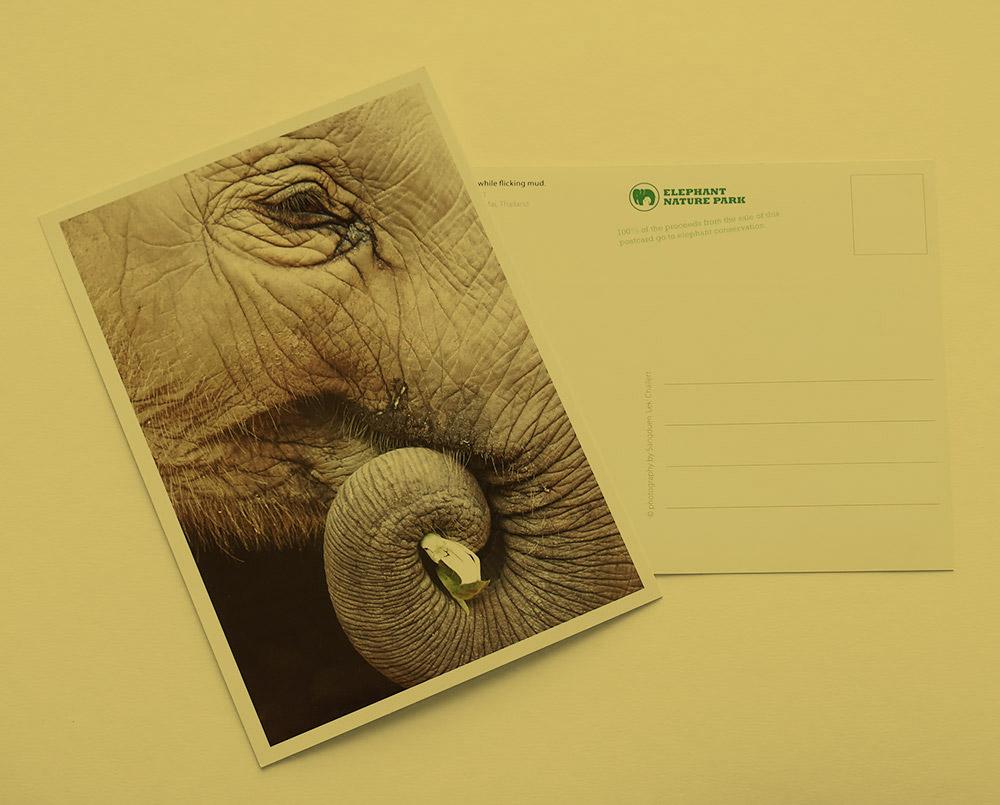 Printmedien Elephant Nature Park
