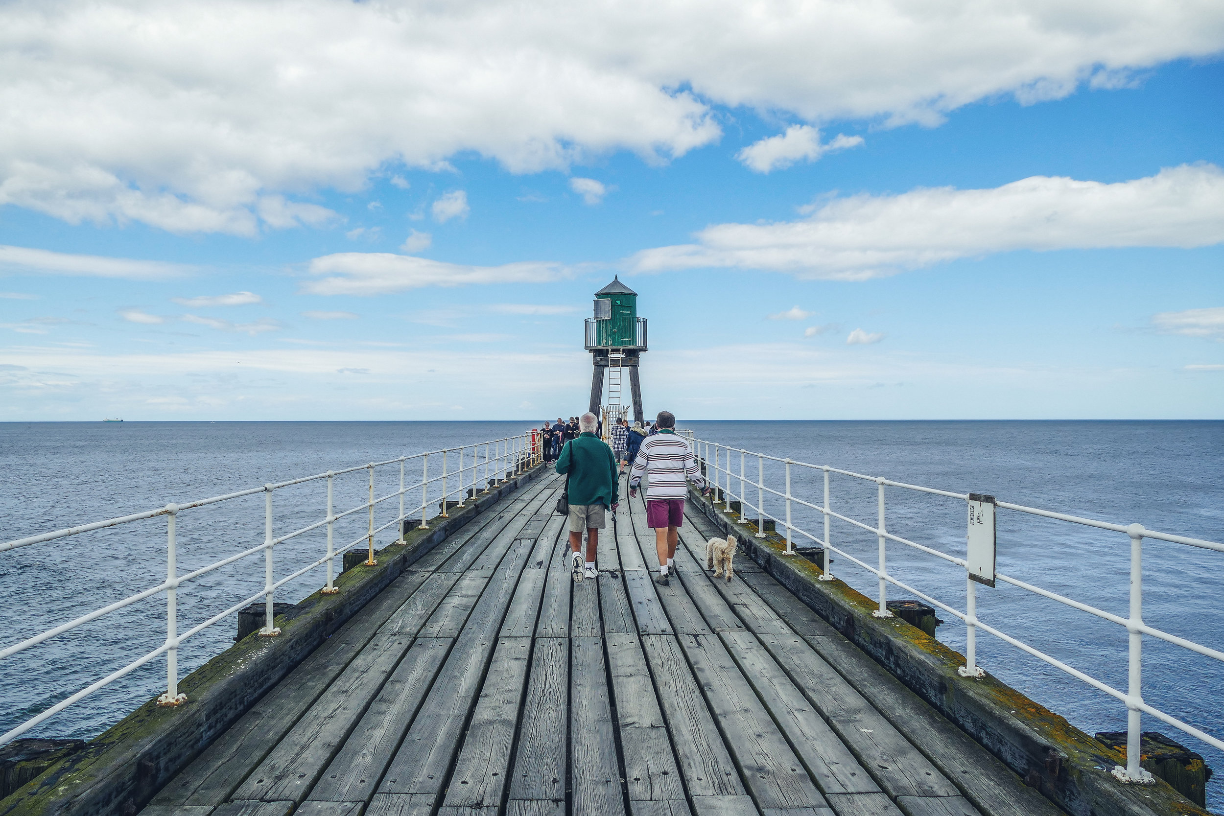 dog walking on pier.jpg