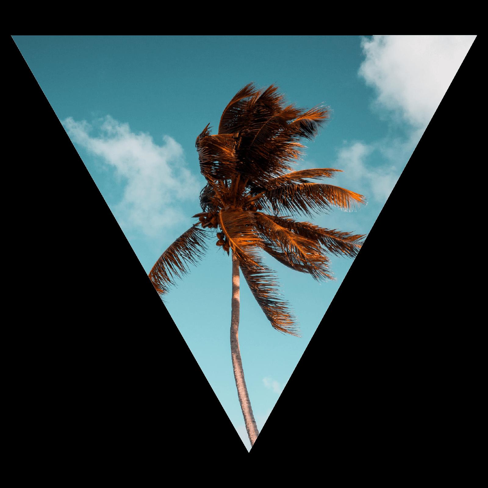'V' Palm.png