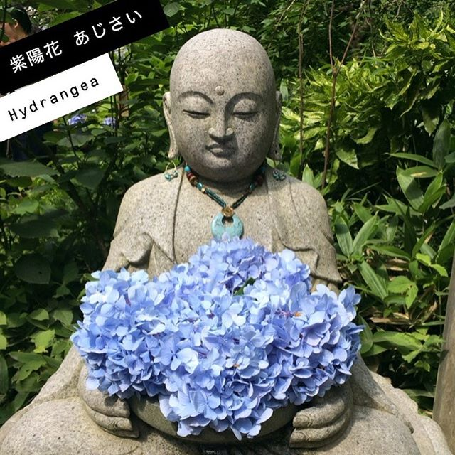 The blue hydrangeas at Kamakura's Meigetsu-in are so beautiful! It wasn't even open when we arrived, and there was already a huge queue. But it was well worth the wait! ⠀⠀⠀⠀⠀⠀⠀⠀⠀⠀⠀⠀ ⠀⠀⠀⠀⠀⠀⠀⠀⠀⠀⠀⠀ ⠀⠀⠀⠀⠀⠀⠀⠀⠀⠀鎌倉明月院の紫陽花の青い花は素敵ですね。私たちの到着にまだ開けていなかったのに、もうすごい行列がありました。でも待つ甲斐はありました‼︎ 🌸翻訳のプロジェクトなどがあれば、ご相談しましょう〜🌸⠀⠀⠀⠀⠀⠀⠀⠀⠀⠀⠀⠀ ⠀⠀⠀⠀⠀⠀⠀⠀⠀⠀⠀⠀ ⠀⠀⠀⠀⠀⠀⠀⠀⠀⠀⠀⠀ ⠀ ⠀⠀⠀⠀⠀⠀⠀⠀⠀⠀⠀⠀ ⠀⠀⠀⠀⠀⠀⠀⠀⠀⠀⠀⠀ ⠀⠀⠀⠀⠀⠀⠀⠀⠀⠀⠀⠀ #紫陽花 #明月院#明月院あじさい #青い紫陽花 #日本 #国内旅行 #鎌倉 ##自然 #翻訳 #翻訳家 #英訳 #英語#hydrangea #meigestuin #bluehydrangea #temple #japan #japantravel #nature #translation #translator #japanesetranslation #japanesewords