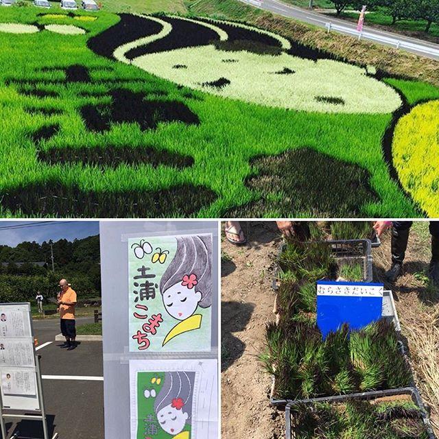 3年間前に田んぼアートのプロジェクトに参加する機会がありました‼︎ 生きているアートを作りのは本当にすごいでしょう。 3 years ago, I had the chance to take part in planting some rice field art. Creating living art was so much fun! ・ ・ ・ ・ #茨城県 #土浦市 #小町の館 #田んぼアート #田んぼアート2016 #田舎 #アート #生きているアート #翻訳 #翻訳家 #英訳 #観光 #観光翻訳 #ibaraki #tsuchiura #komachi #ricefield #ricefieldart #countryside #japan #art #livingart #translation #translator #japanesetranslation #japanesetranslator #tourism #tourismtranslator
