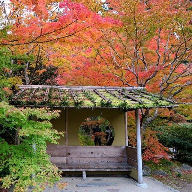 Japan comes alive with beautiful colours in autumn! 🍁 全国の紅葉が美しすぎるでしょう! ・ ・ ・ #紅葉 #日本 #自然 #秋 #庭園 #翻訳家 #フリーランス翻訳家 #英訳#autumnleaves #momiji #japan #nature #fall #autumn #japanesegarden #translator #japanesetranslator