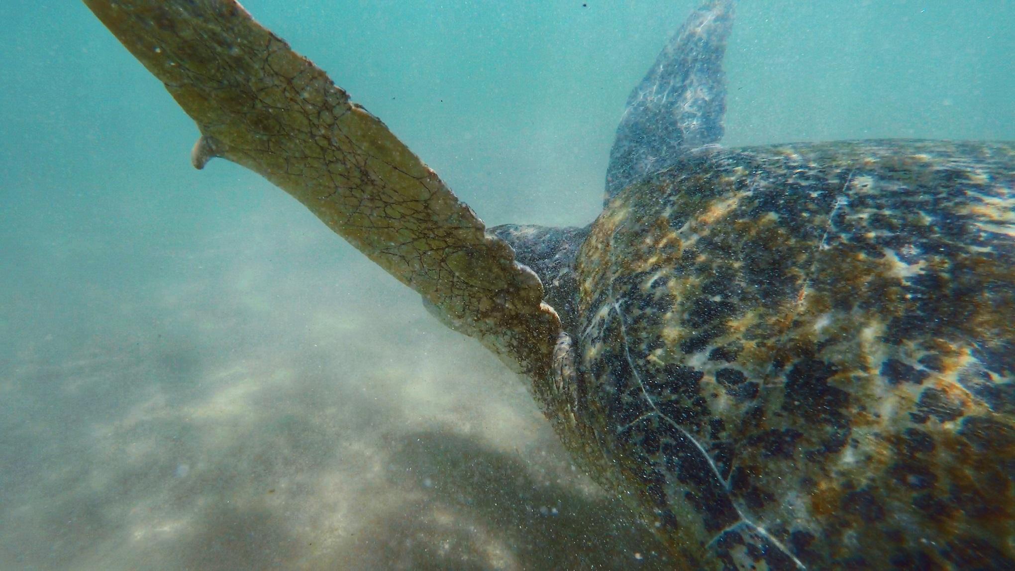 Sri Lanka Turtles.JPG