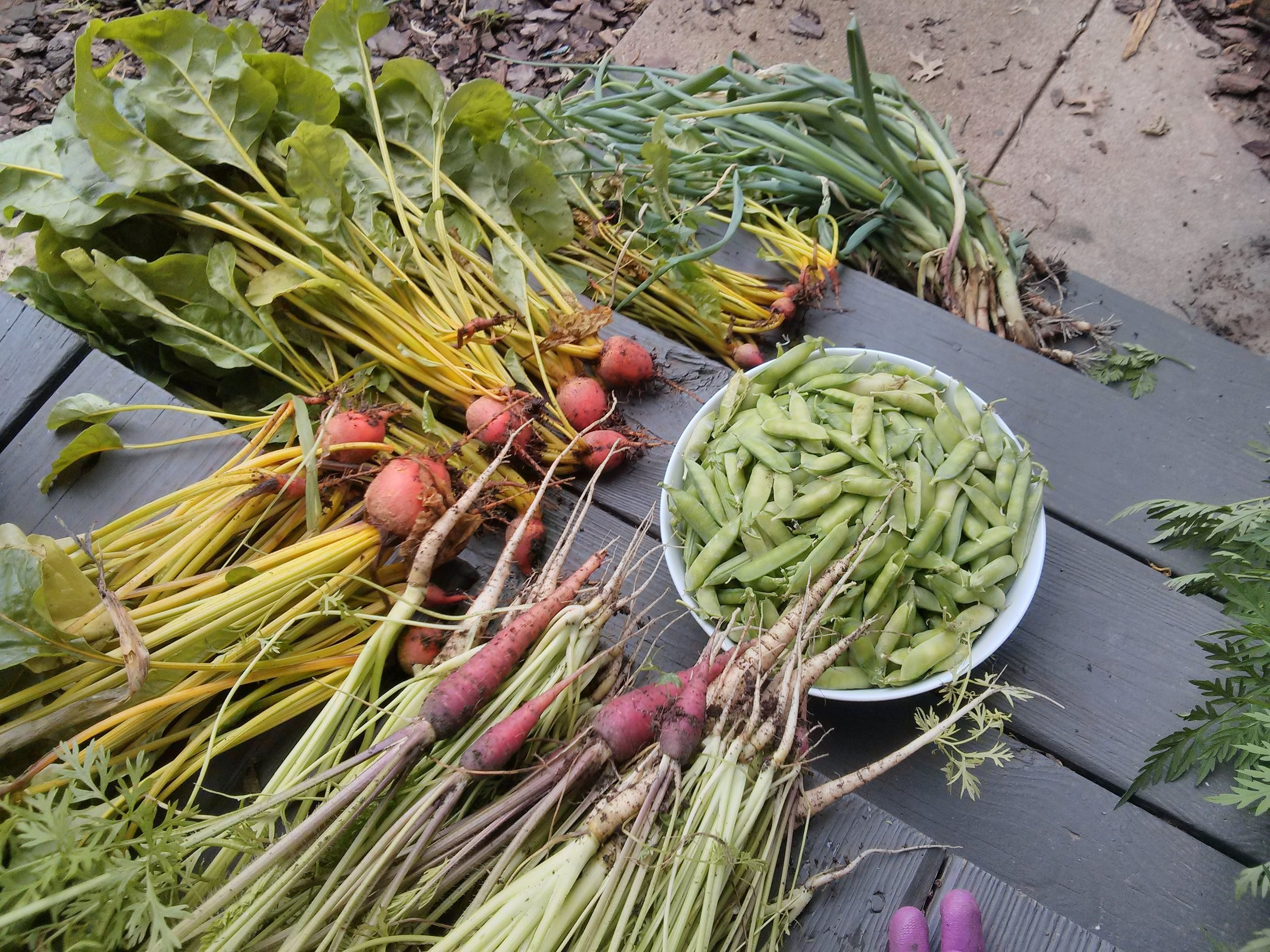 grow your own food - We can help!