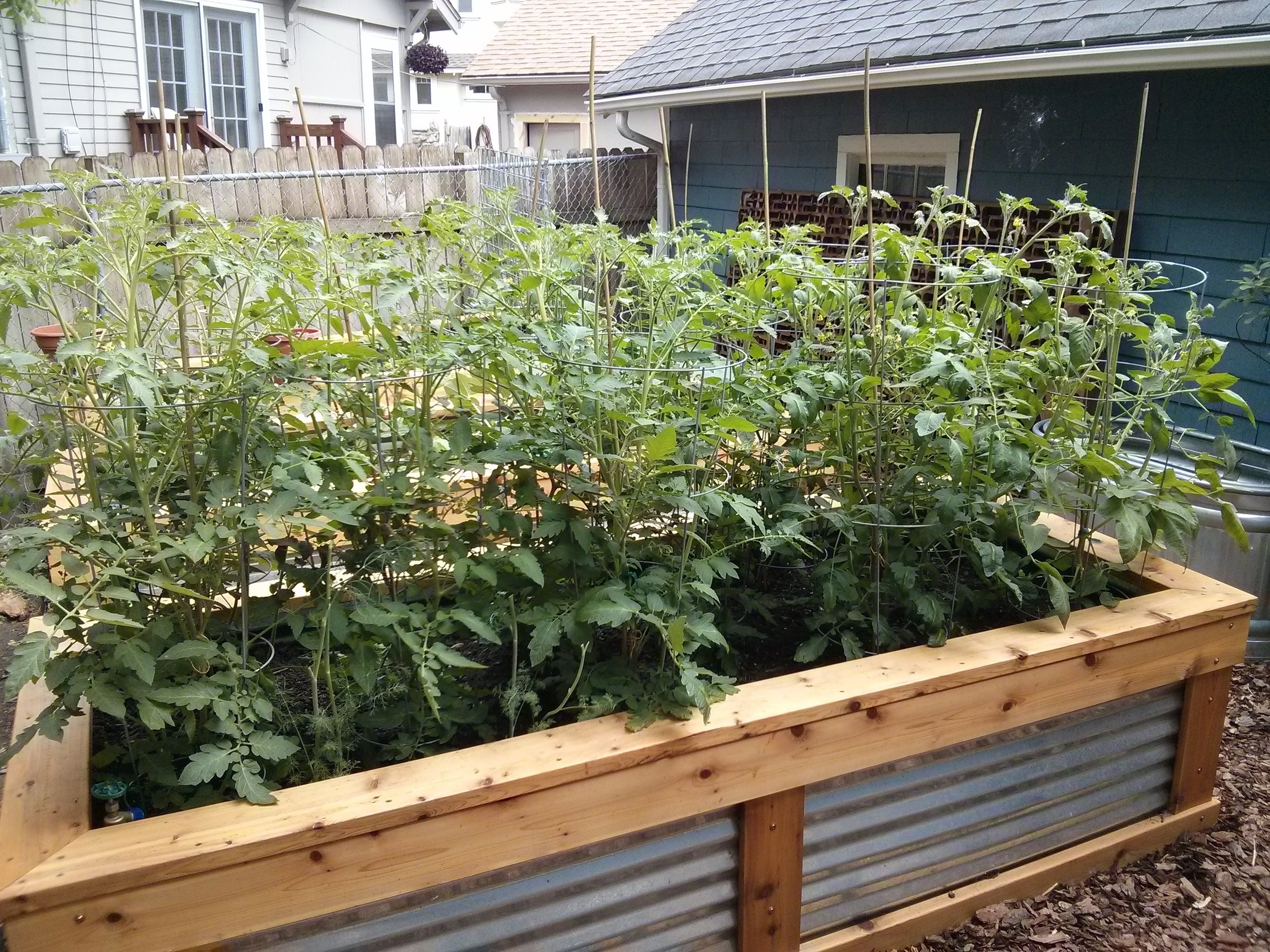 Vegetable Garden Consulting and Install - We can assist you in selecting which plants will work best for your space, your lighting and your lifestyle needs. We can also help you get your garden planted for spring.