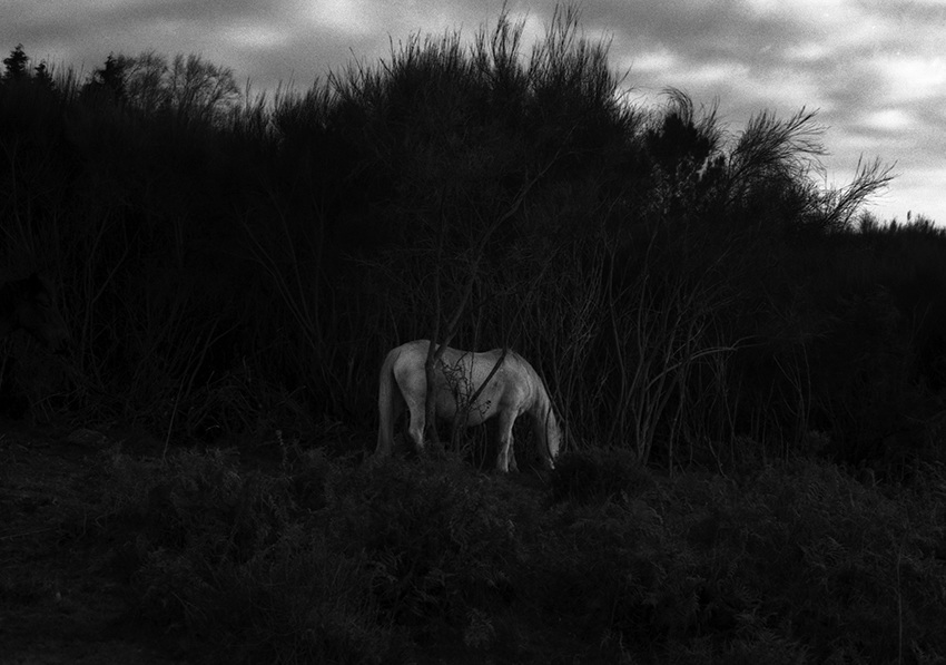 Leilão#2: Sob vigia dos animais antigos - 23-26 de junho 201923 fotografias de Maria Oliveira> Sobre a artista> Catálogo> Resultado do leilão