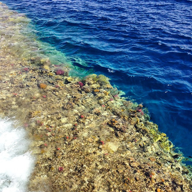Sharm-el-Sheik Coral reef