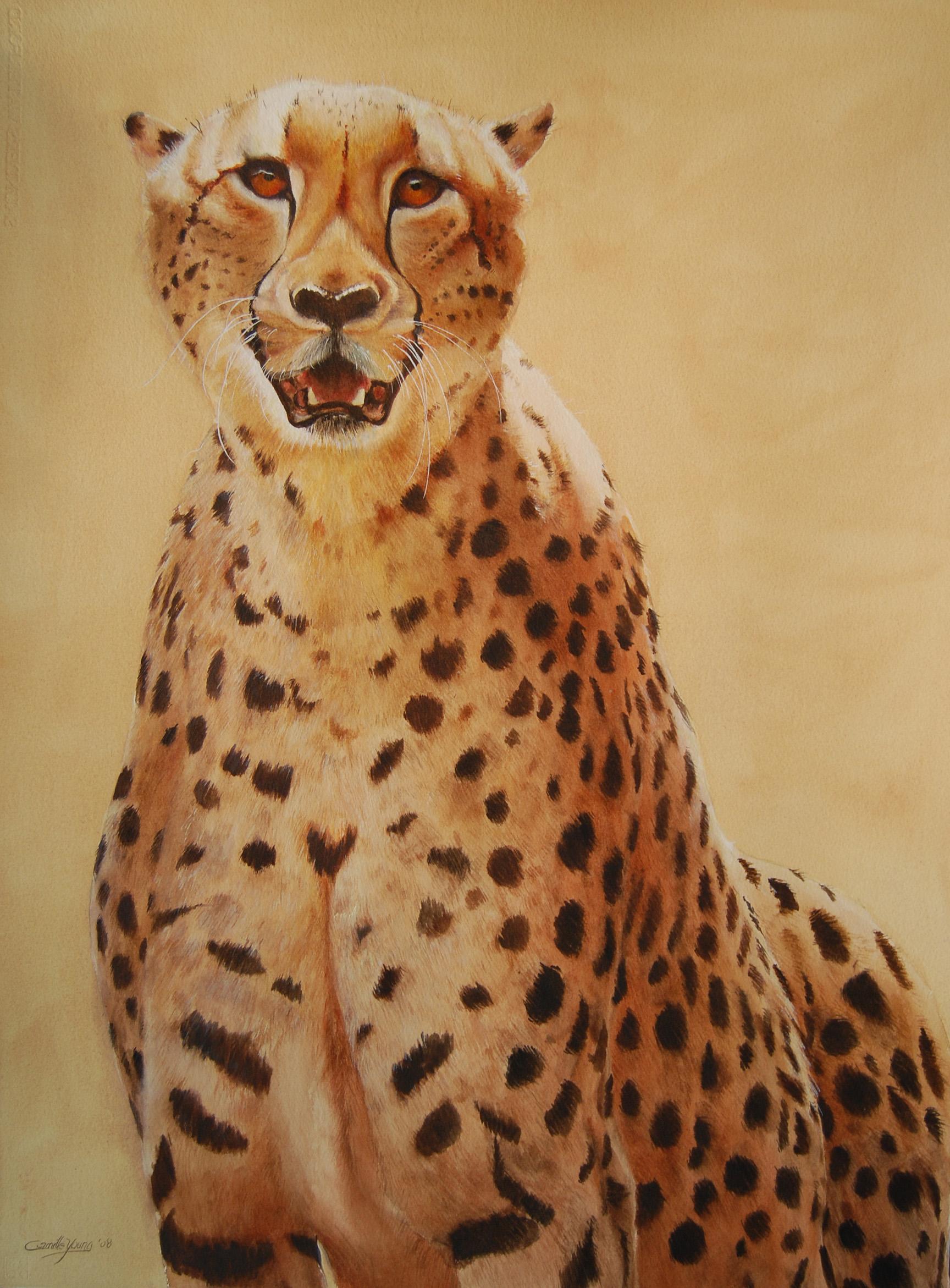Cheetah   More Info →