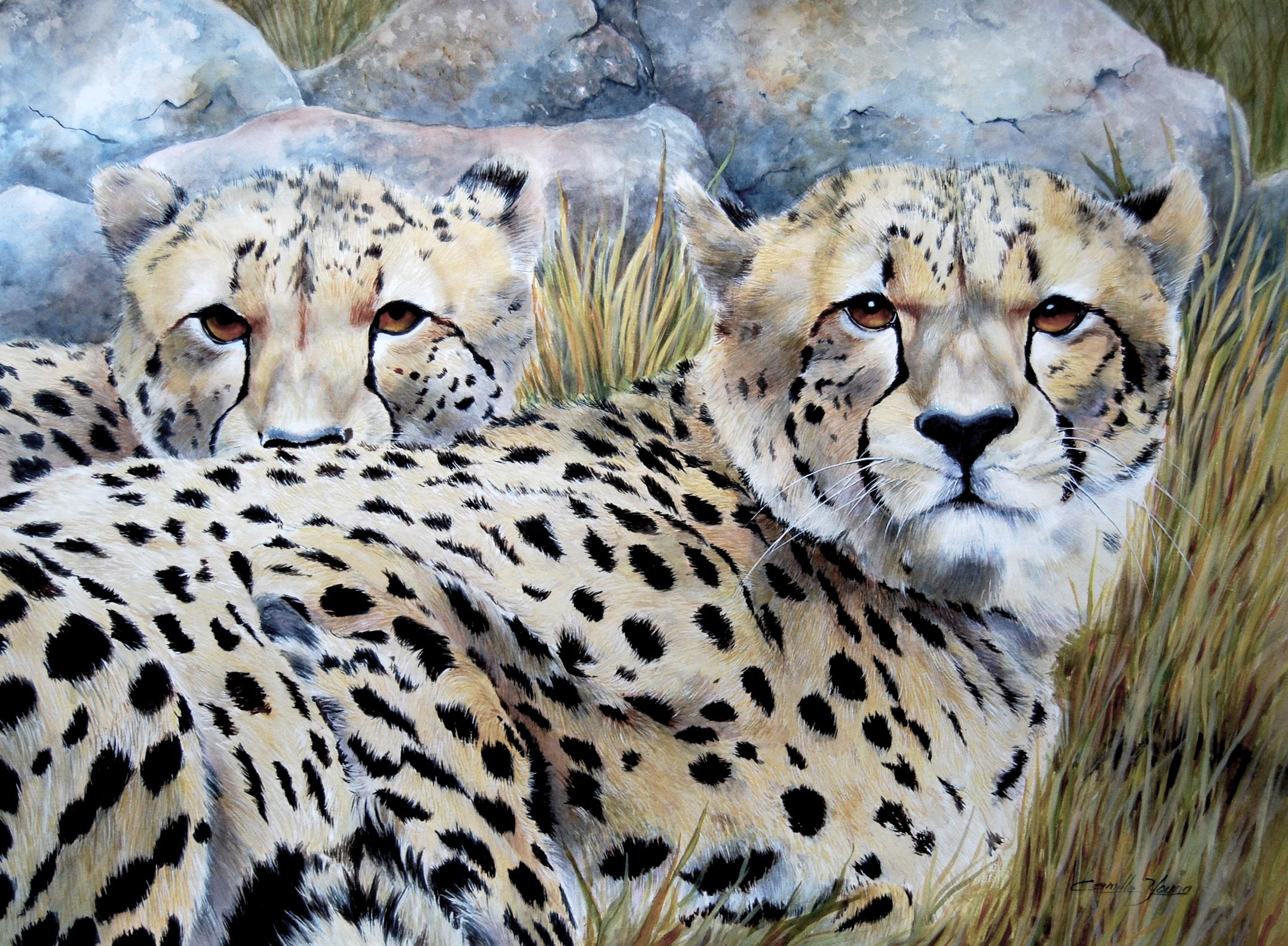 Rising Cheetahs   More Info →