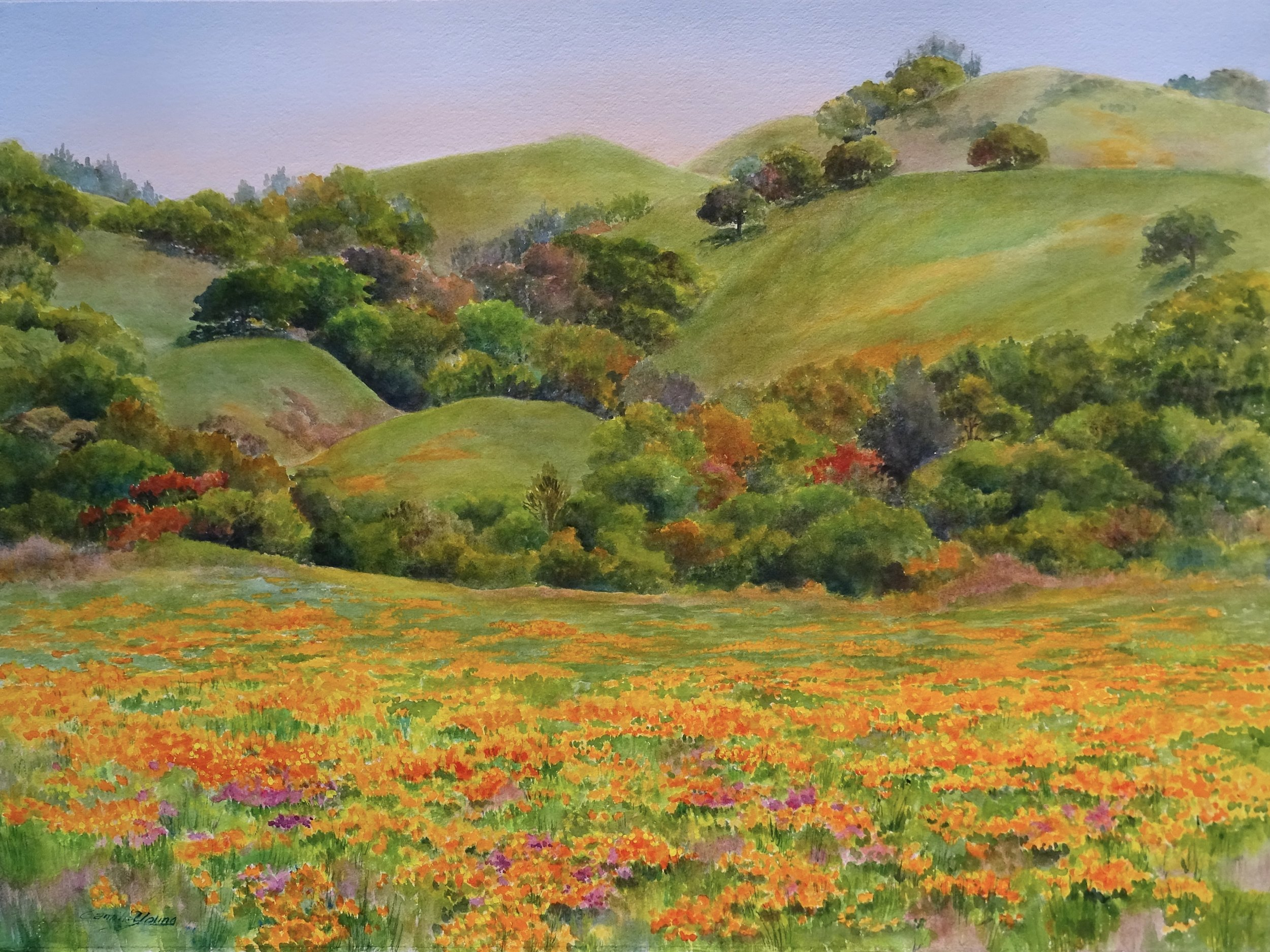 Mt. Diablo Poppies   More Info →