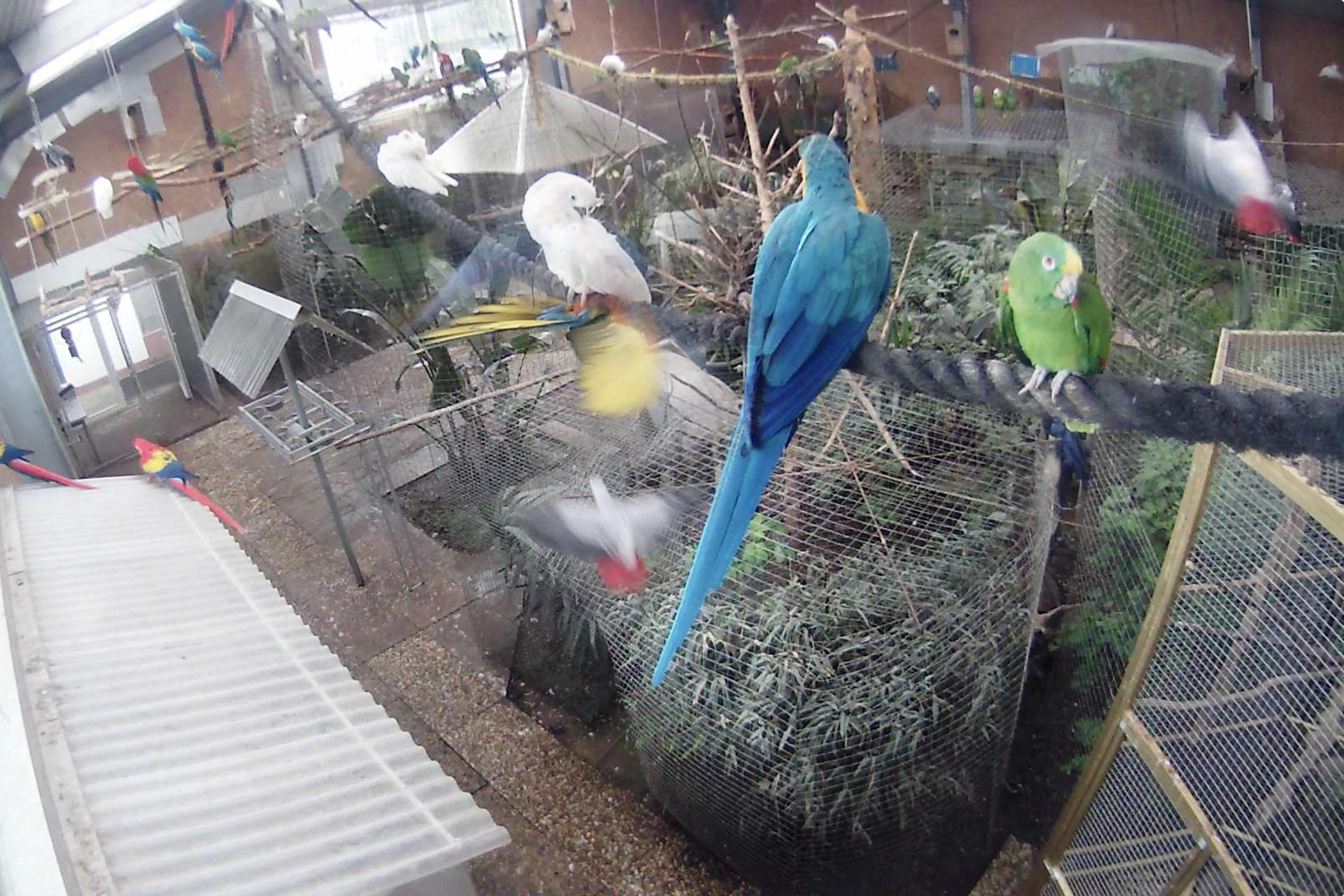 uccellirid.jpg