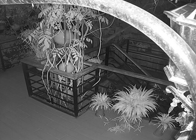 photo from surveillance camera
