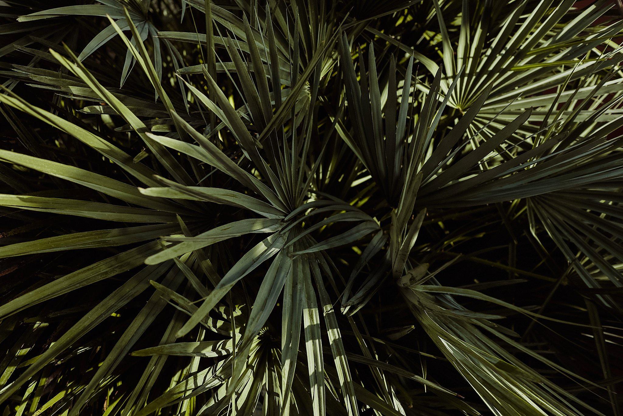 Nature_Photography_0003.jpg
