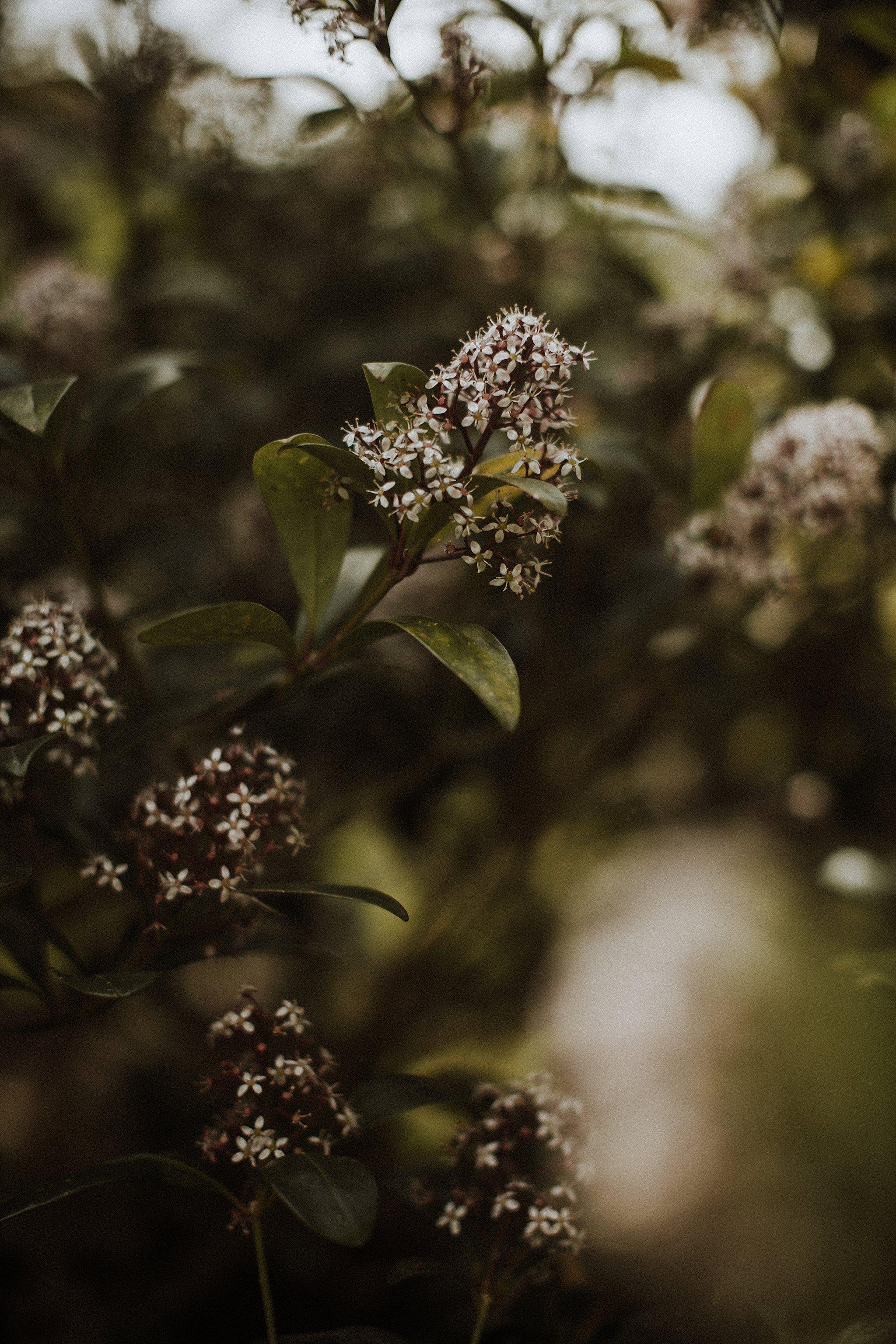 Nature_Photography_0013.jpg