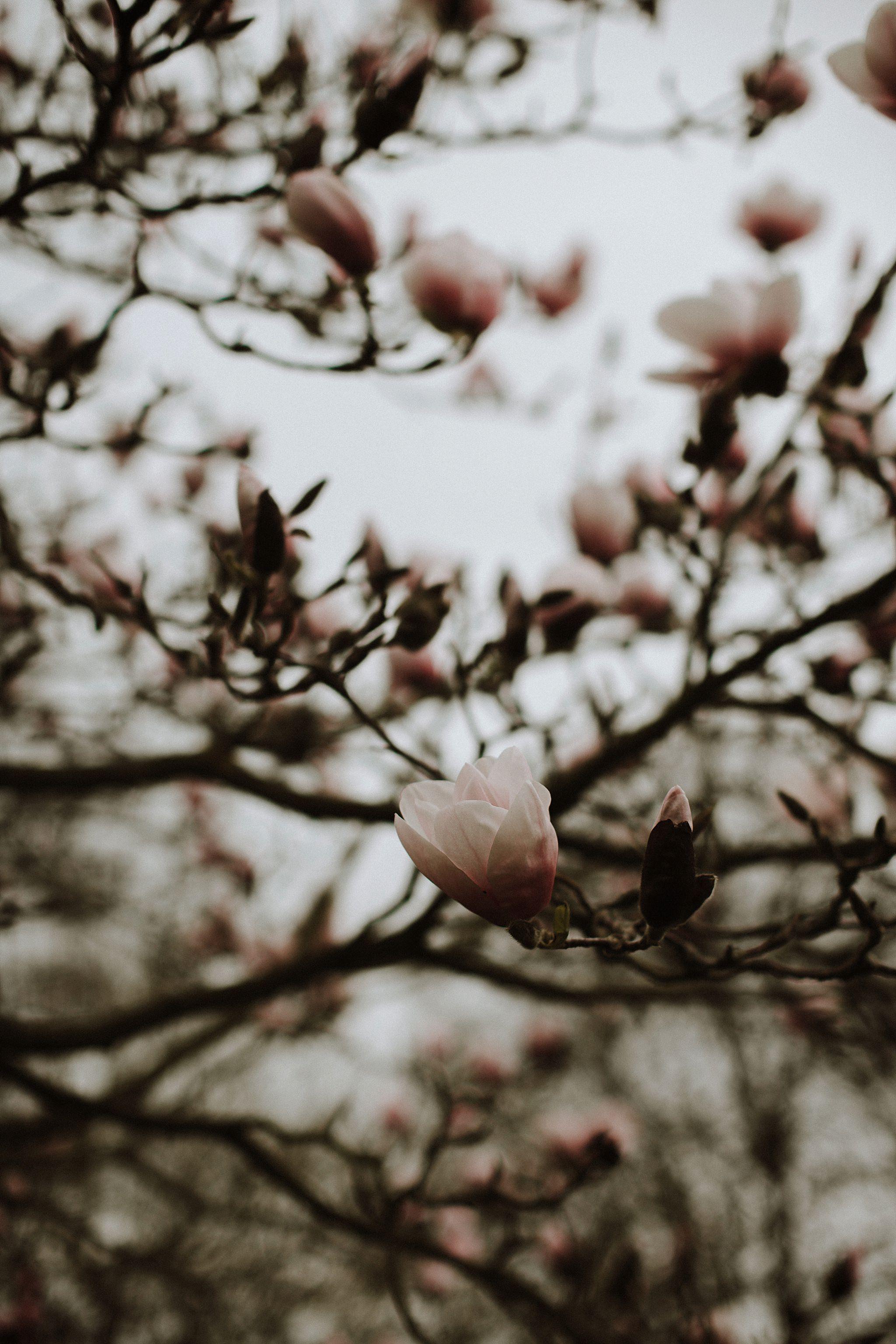Nature_Photography_0009.jpg