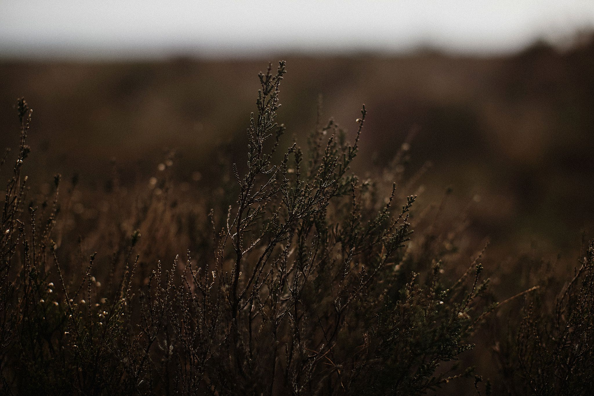 Derbyshire_Photographer_0012.jpg