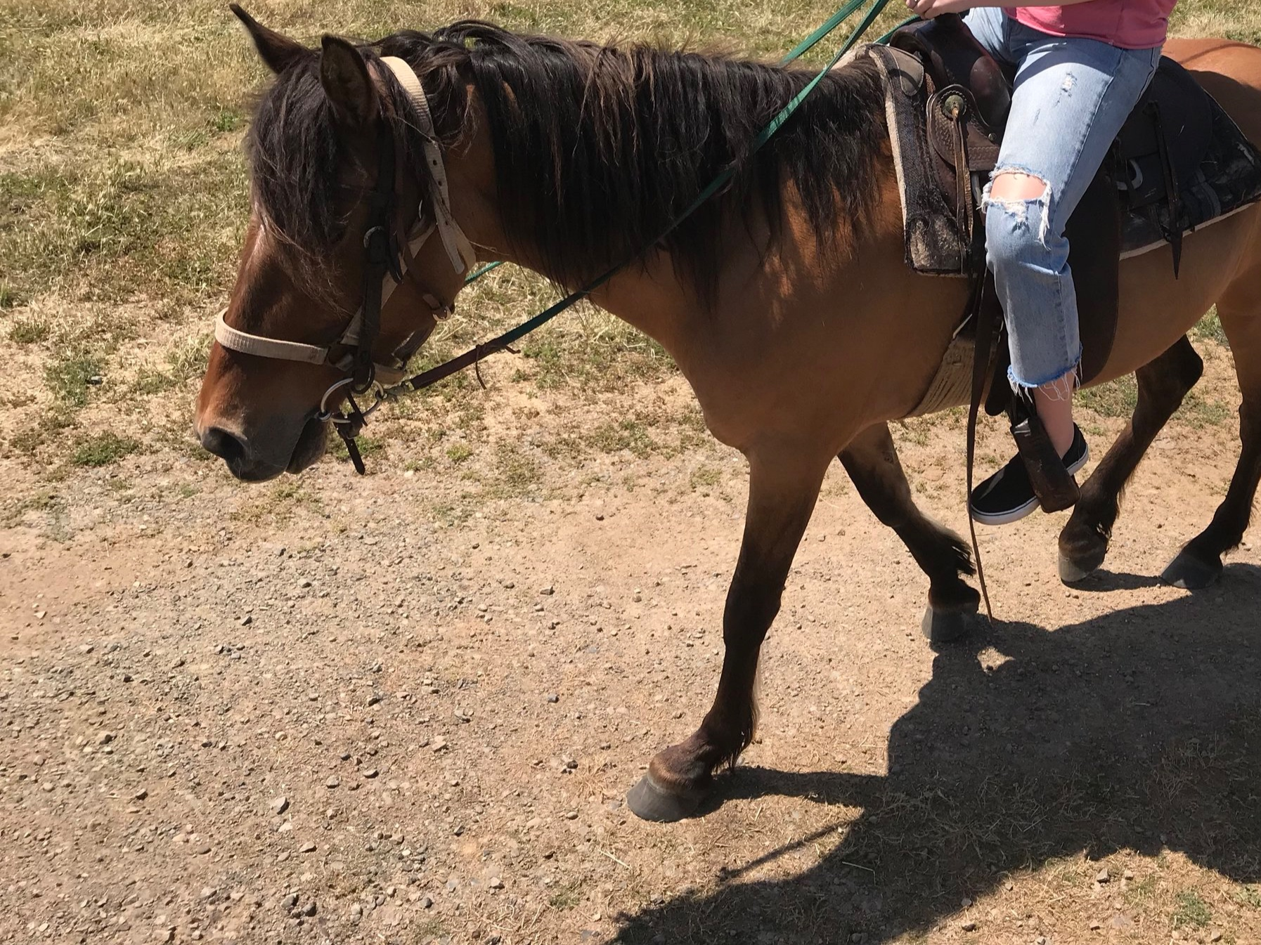 ROSABELLE - Rosabelle, also known as Rose: Shy, soft and kind to the core, Rose can put any rider in a calm, relaxed state of mind. She is a Kiger Mustang, a breed known for outstanding beauty and grace. Rose is very sweet and loves love.