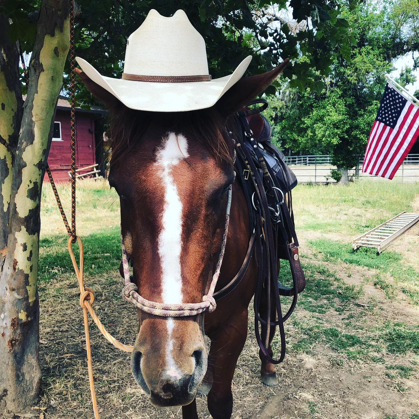 "WILLOW - Willow: Raised and trained by Kalea, Willow is a very talented horse.  She is calm and has never let us down. Willow is full of love and willingness to please. She will still need some time to mature into a ""bomb-proof"" horse. Until then, she will work as a wrangler horse."