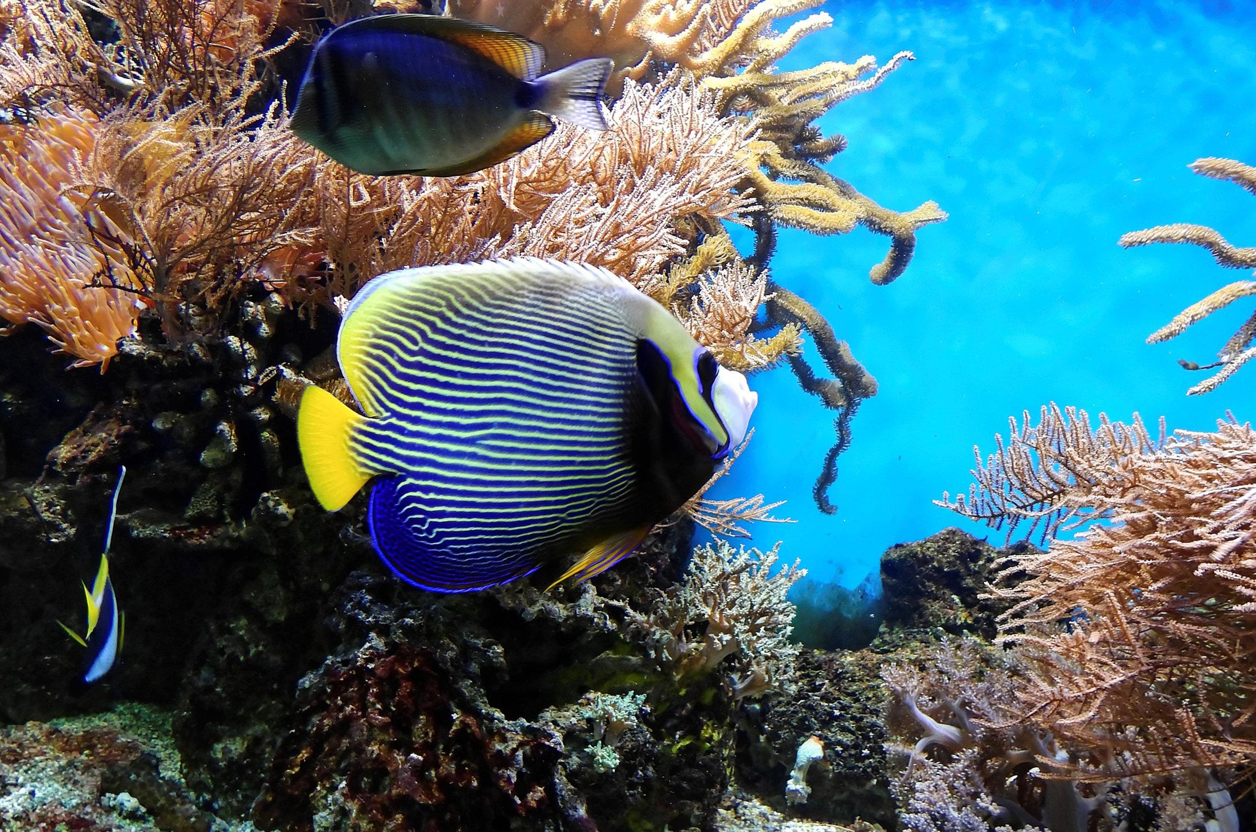 Fish_Img1.jpg