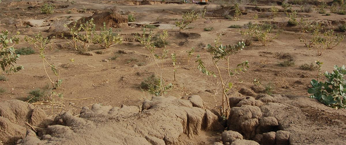soil-degradation-2.png