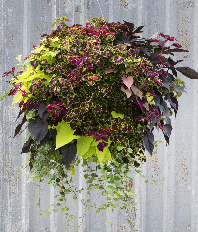 foliage-1-1200x1408.jpg