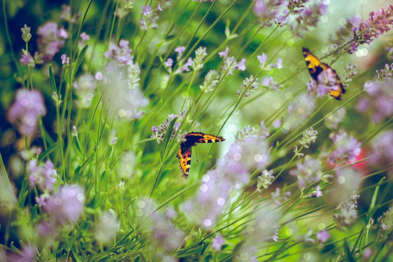 Meaning of Butterflies.jpg