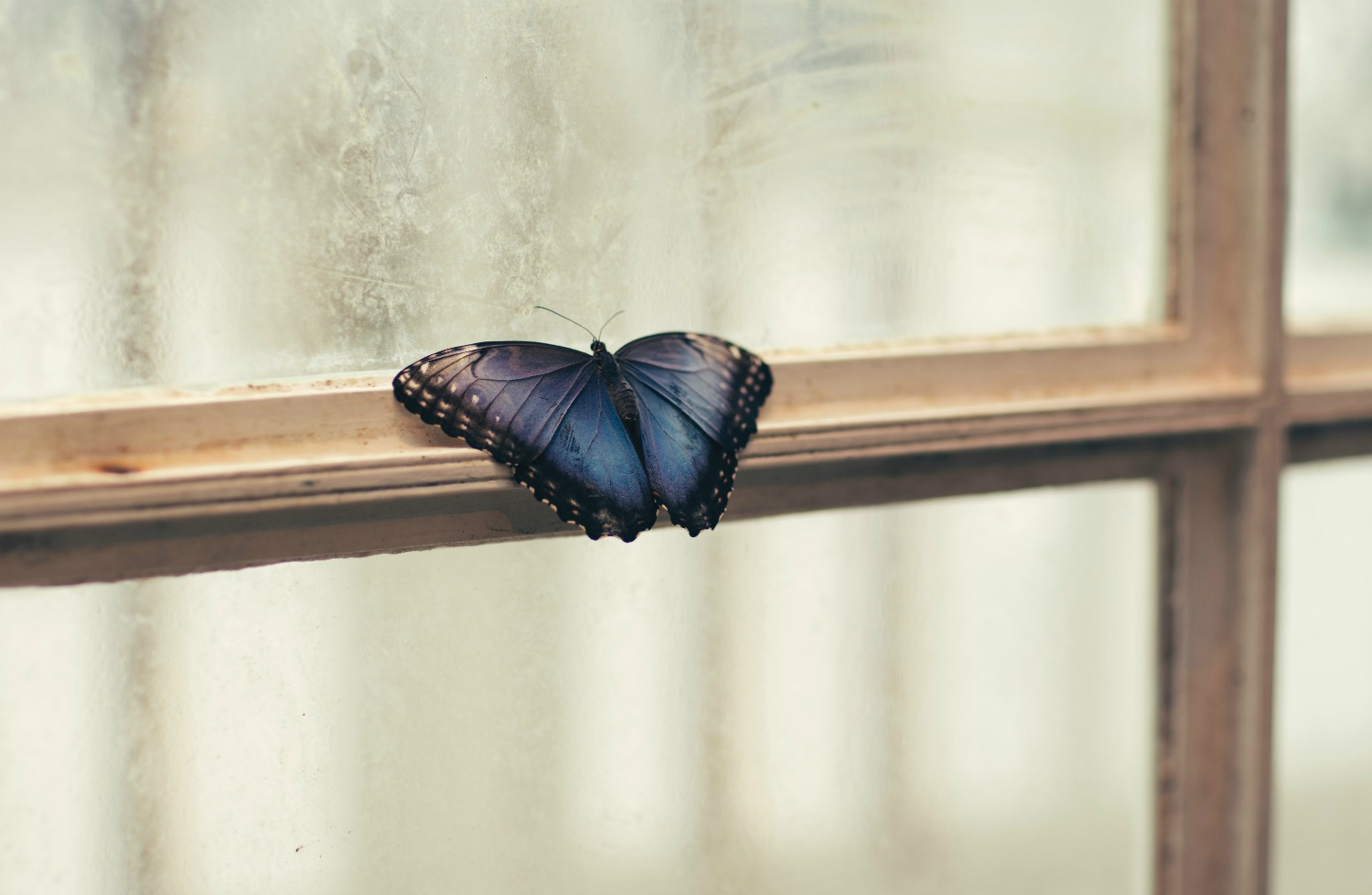 So, what does it mean when a butterfly visits you? -