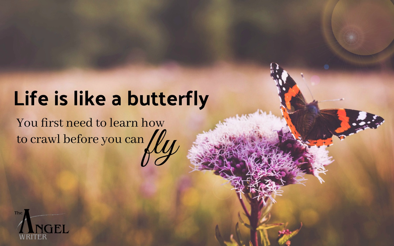 butterfly meaning.jpg