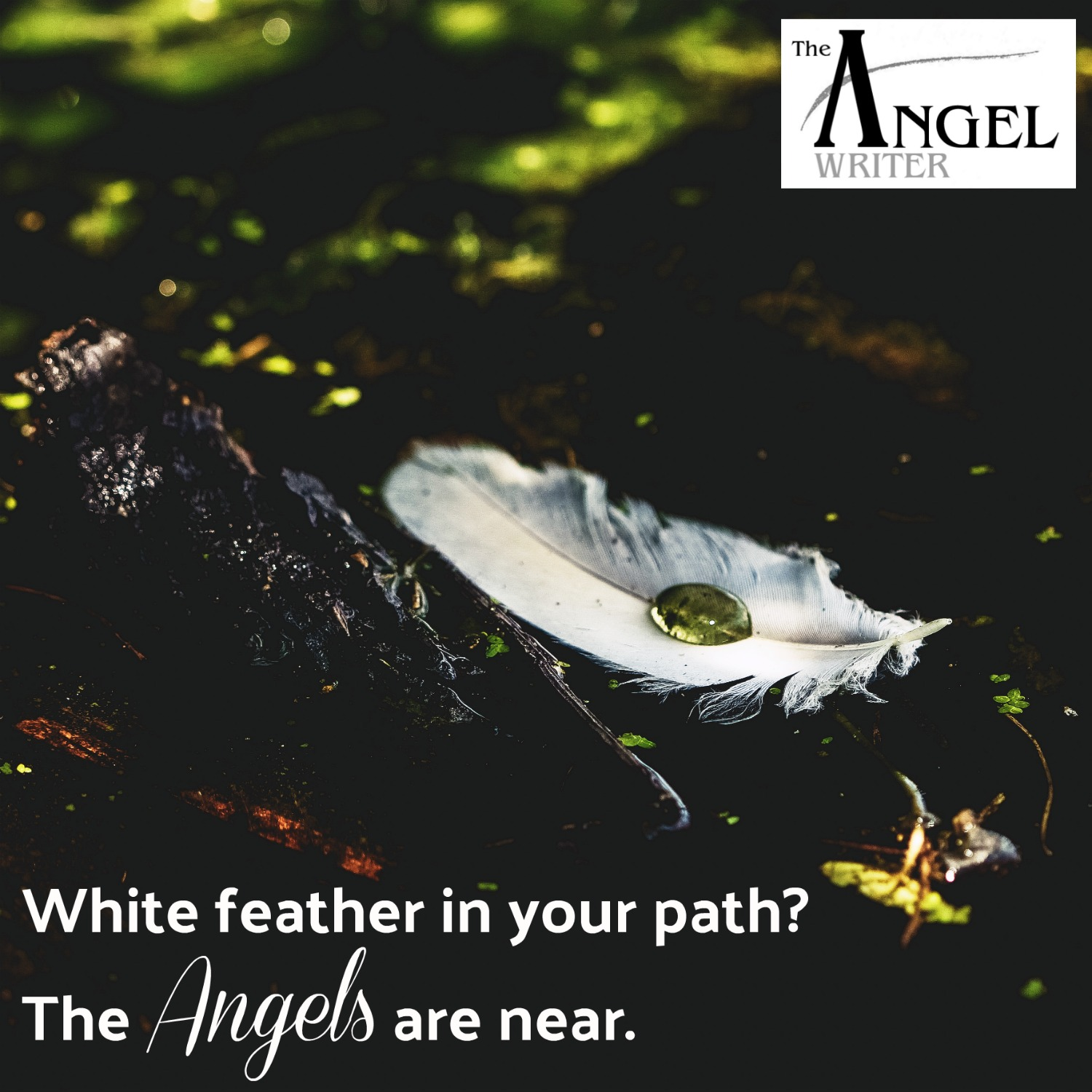 White_feather_sign_of_the_angels.jpg