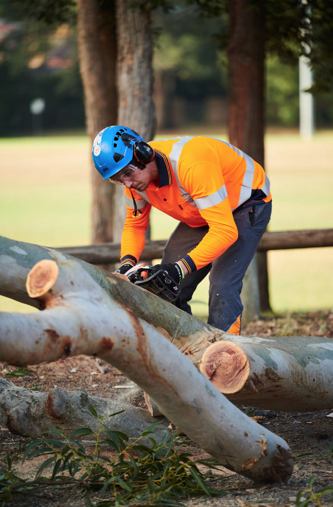 - Tree CUTTING and stump grinding