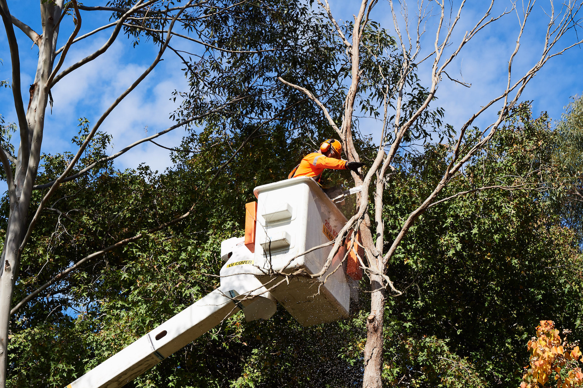 - TREE care and ADVICE