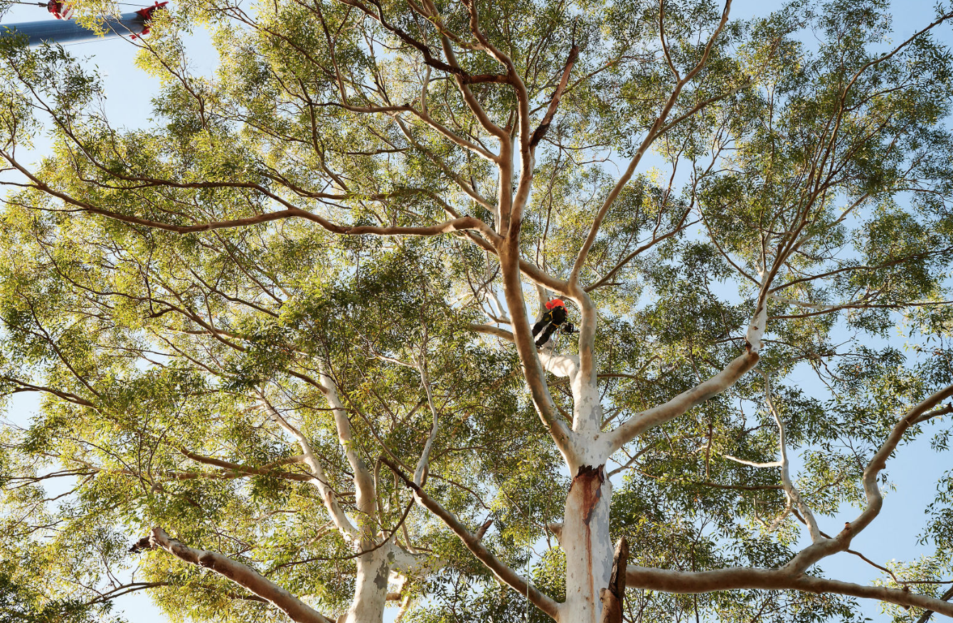 - arboriculturE