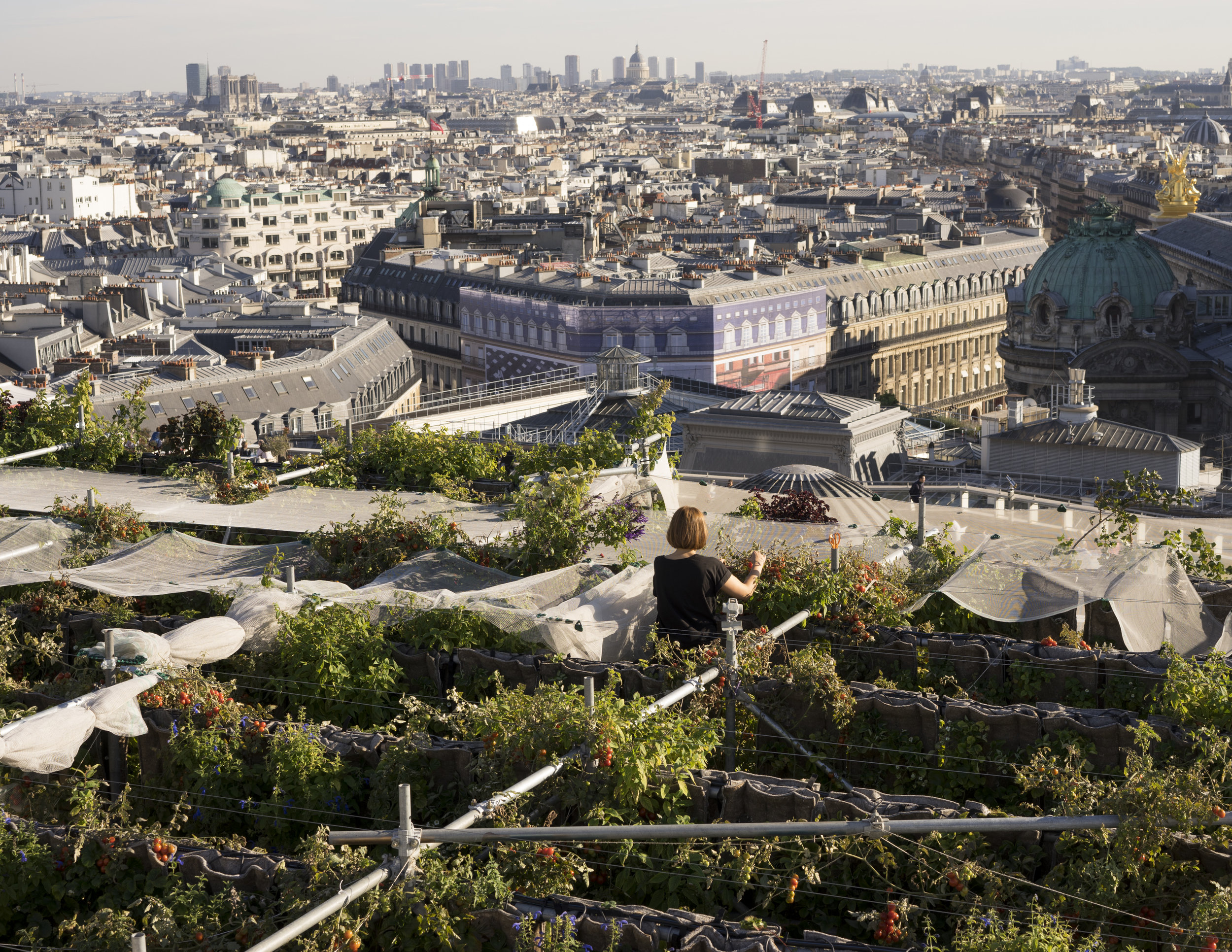Urban garden on Galeries Lafayette Paris Haussmann's rooftop